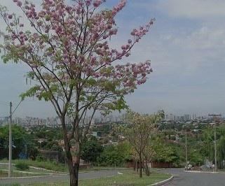 Passagem de onibus da Nacional Expresso de Ribeirao Preto para Goiania